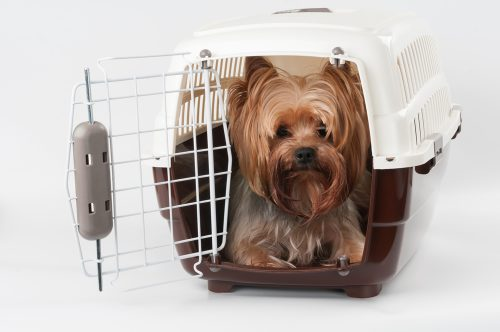 Flying with your furry friends: necessary documents